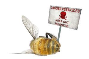 Pesticides are killing bees